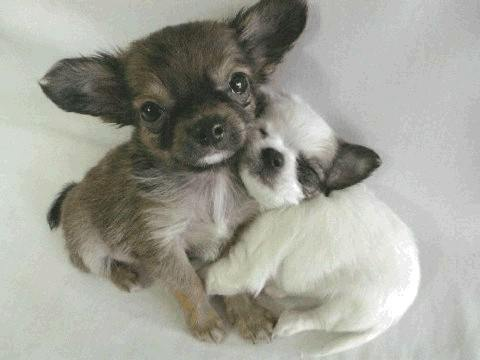 Image result for cute hugs